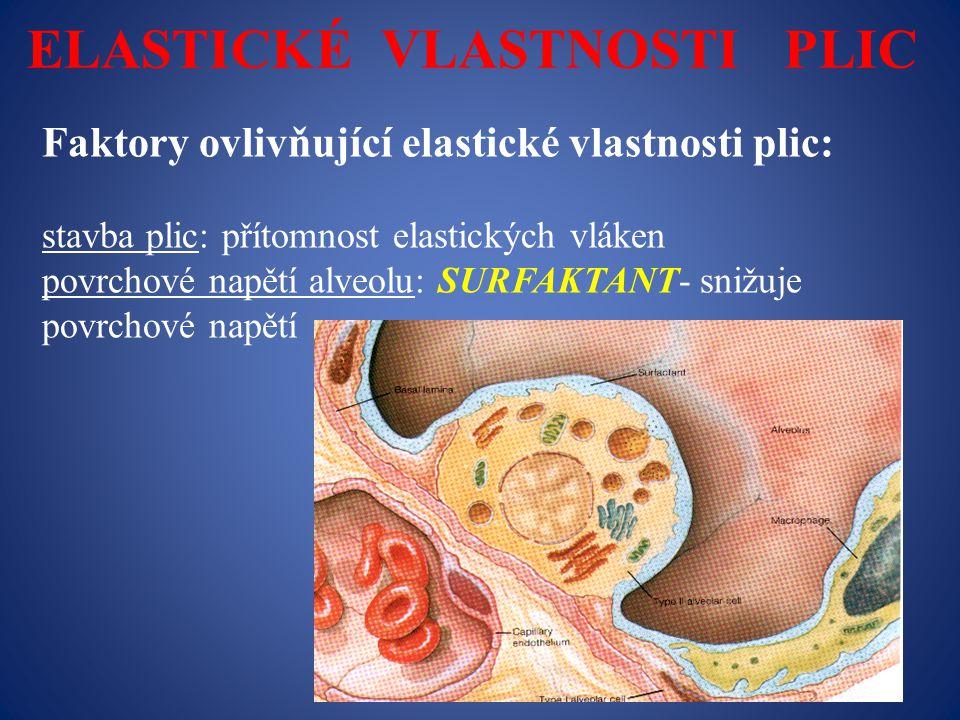 ELASTICKÉ VLASTNOSTI PLIC Faktory ovlivňující elastické vlastnosti plic: stavba plic: přítomnost elastických vláken povrchové napětí alveolu: SURFAKTANT- snižuje povrchové napětí