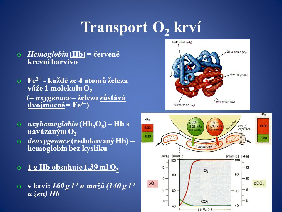Transport O 2 krví oHemoglobin (Hb) = červené krevní barvivo oFe 2+ - každé ze 4 atomů železa váže 1 molekulu O 2 (= oxygenace – železo zůstává dvojmocné = Fe 2+ ) ooxyhemoglobin (Hb 4 O 8 ) – Hb s navázaným O 2 odeoxygenace (redukovaný Hb) – hemoglobin bez kyslíku o1 g Hb obsahuje 1,39 ml O 2 ov krvi: 160 g.l -1 u mužů (140 g.l -1 u žen) Hb
