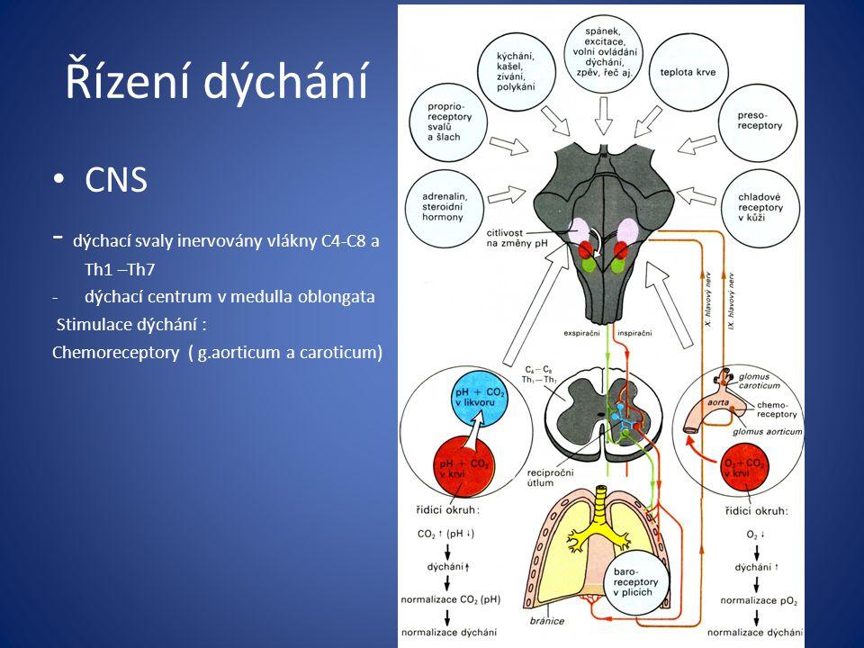 Řízení dýchání CNS - dýchací svaly inervovány vlákny C4-C8 a Th1 –Th7 -dýchací centrum v medulla oblongata Stimulace dýchání : Chemoreceptory ( g.aorticum a caroticum)