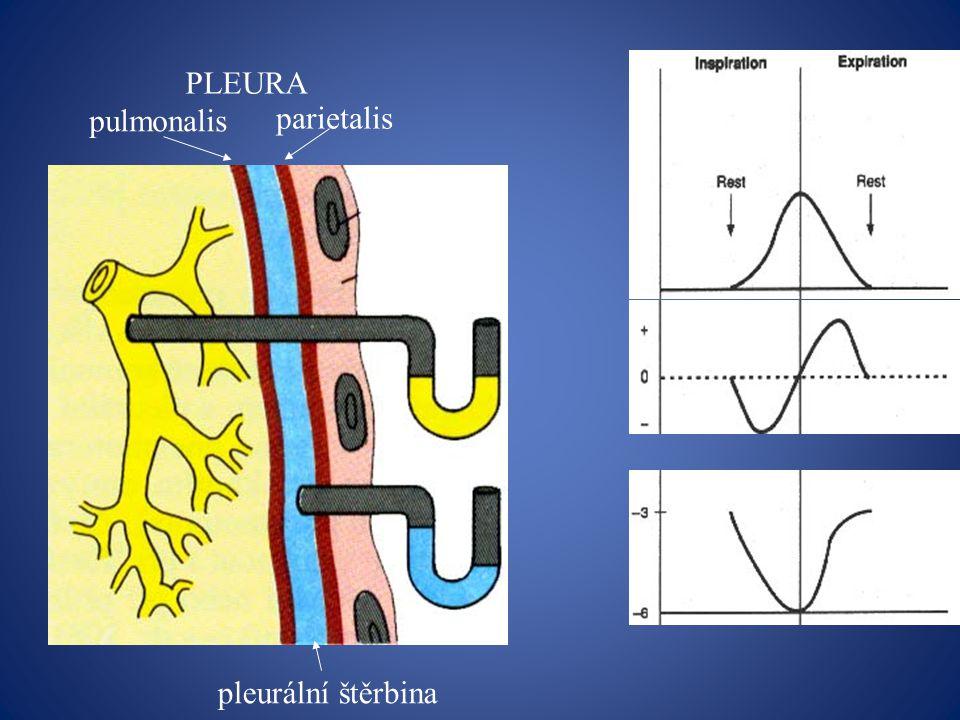 Základní funkce dýchacího systému Ventilace = zajišťuje výměnu vzduchu mezi okolní atmosférou a alveoly (plicními sklípky) Distribuce = rozdělení vzduchu v dýchacích cestách ( nerovnoměrné – dechová cvičení) Difúze = výměna plynů alveol.vzduchem a krví a krví a tkání Perfúze = průtok krve plícemi Respirace = mechanismus příjmu O 2 či výdeje CO 2