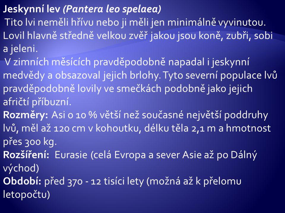 Jeskynní lev (Pantera leo spelaea) Tito lvi neměli hřívu nebo ji měli jen minimálně vyvinutou. Lovil hlavně středně velkou zvěř jakou jsou koně, zubři