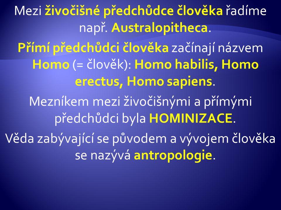 Mezi živočišné předchůdce člověka řadíme např. Australopitheca. Přímí předchůdci člověka začínají názvem Homo (= člověk): Homo habilis, Homo erectus,