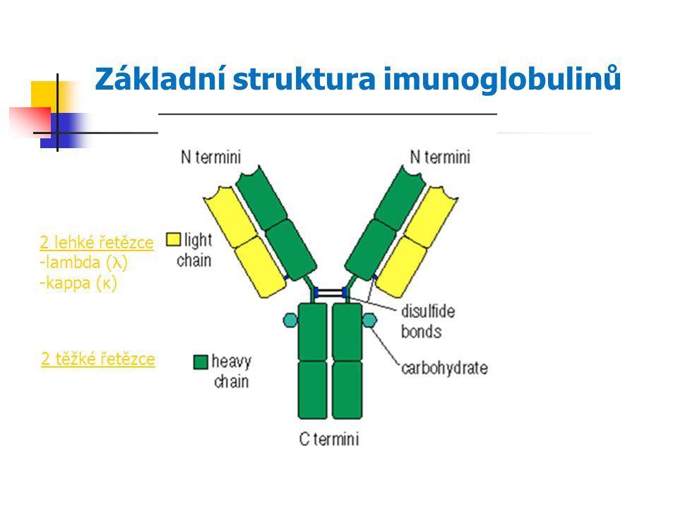 Základní struktura imunoglobulinů 2 lehké řetězce -lambda ( ) -kappa (κ) 2 těžké řetězce