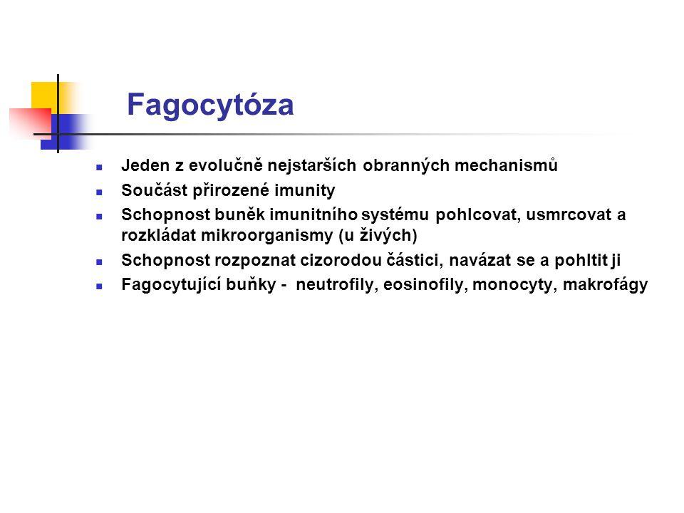 Fagocytóza Jeden z evolučně nejstarších obranných mechanismů Součást přirozené imunity Schopnost buněk imunitního systému pohlcovat, usmrcovat a rozkládat mikroorganismy (u živých) Schopnost rozpoznat cizorodou částici, navázat se a pohltit ji Fagocytující buňky - neutrofily, eosinofily, monocyty, makrofágy