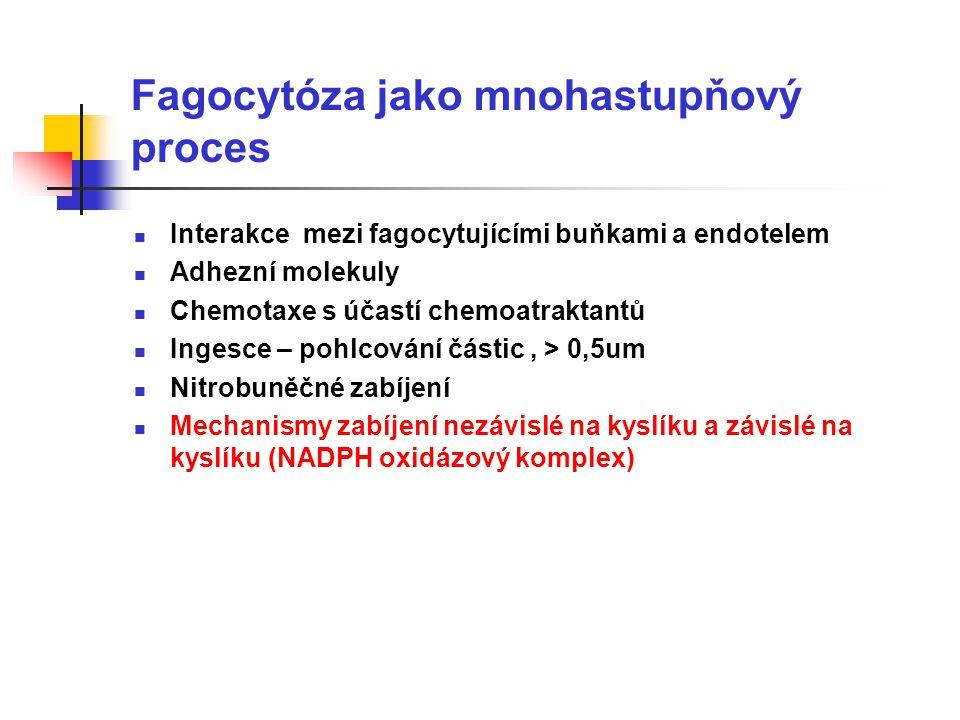 Fagocytóza jako mnohastupňový proces Interakce mezi fagocytujícími buňkami a endotelem Adhezní molekuly Chemotaxe s účastí chemoatraktantů Ingesce – pohlcování částic, > 0,5um Nitrobuněčné zabíjení Mechanismy zabíjení nezávislé na kyslíku a závislé na kyslíku (NADPH oxidázový komplex)