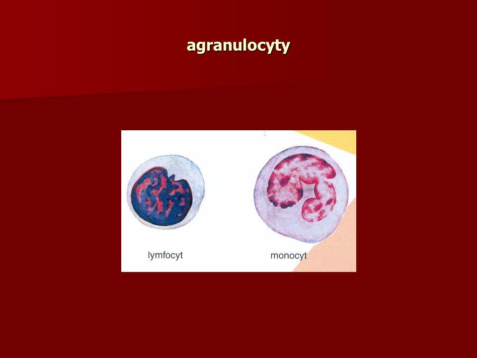 agranulocyty