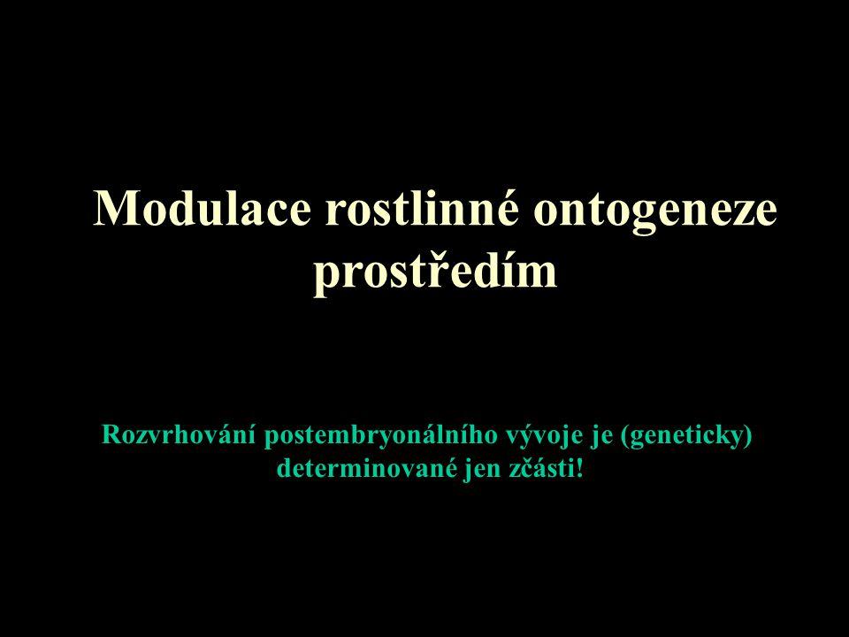 Modulace rostlinné ontogeneze prostředím Rozvrhování postembryonálního vývoje je (geneticky) determinované jen zčásti!