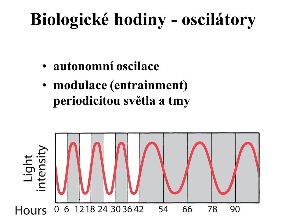 Biologické hodiny - oscilátory autonomní oscilace modulace (entrainment) periodicitou světla a tmy
