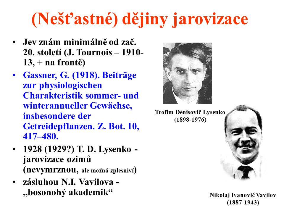 (Nešťastné) dějiny jarovizace Jev znám minimálně od zač. 20. století (J. Tournois – 1910- 13, + na frontě) Gassner, G. (1918). Beiträge zur physiologi