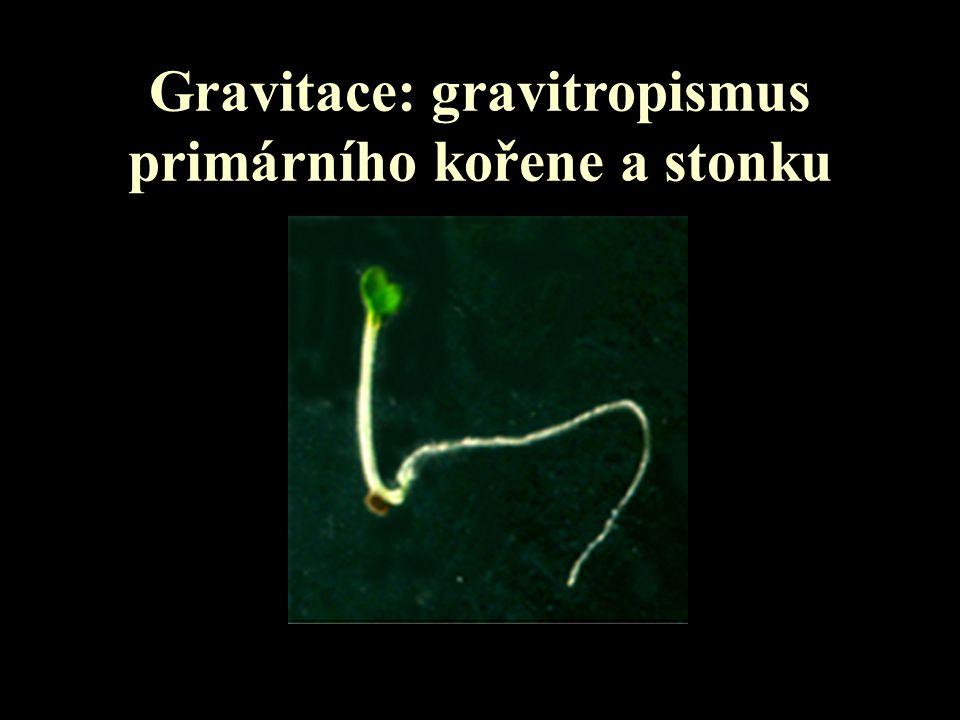 Gravitace: gravitropismus primárního kořene a stonku