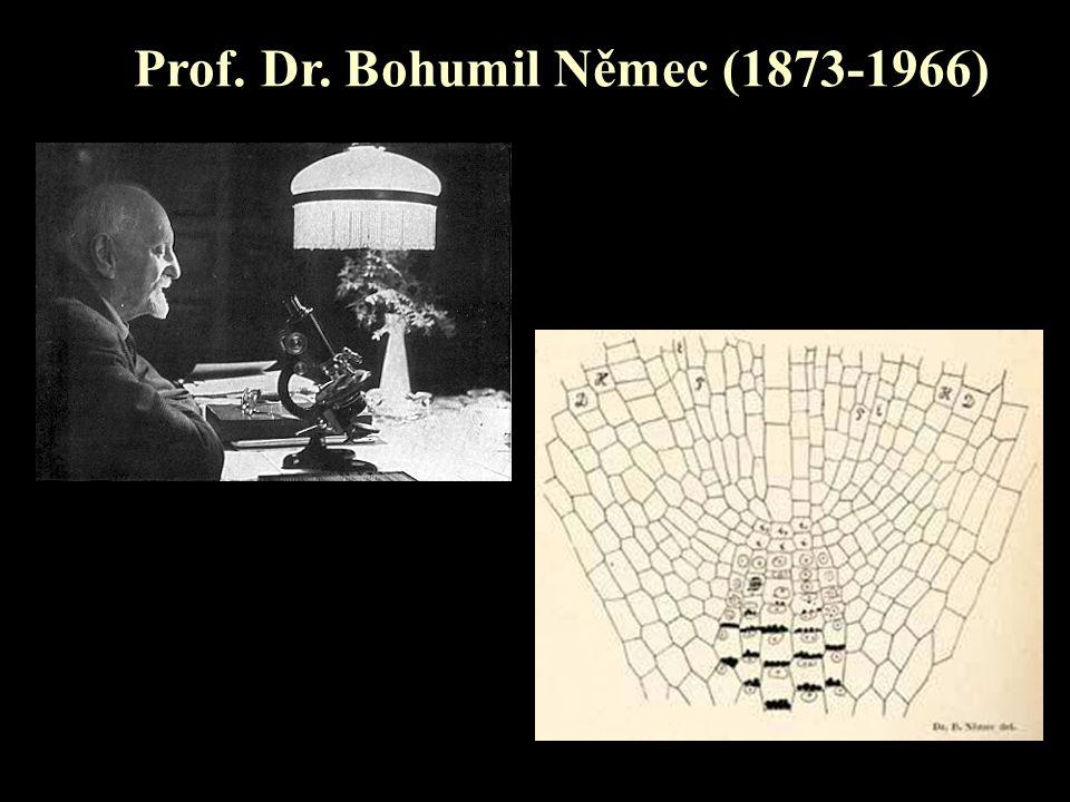 Prof. Dr. Bohumil Němec (1873-1966)