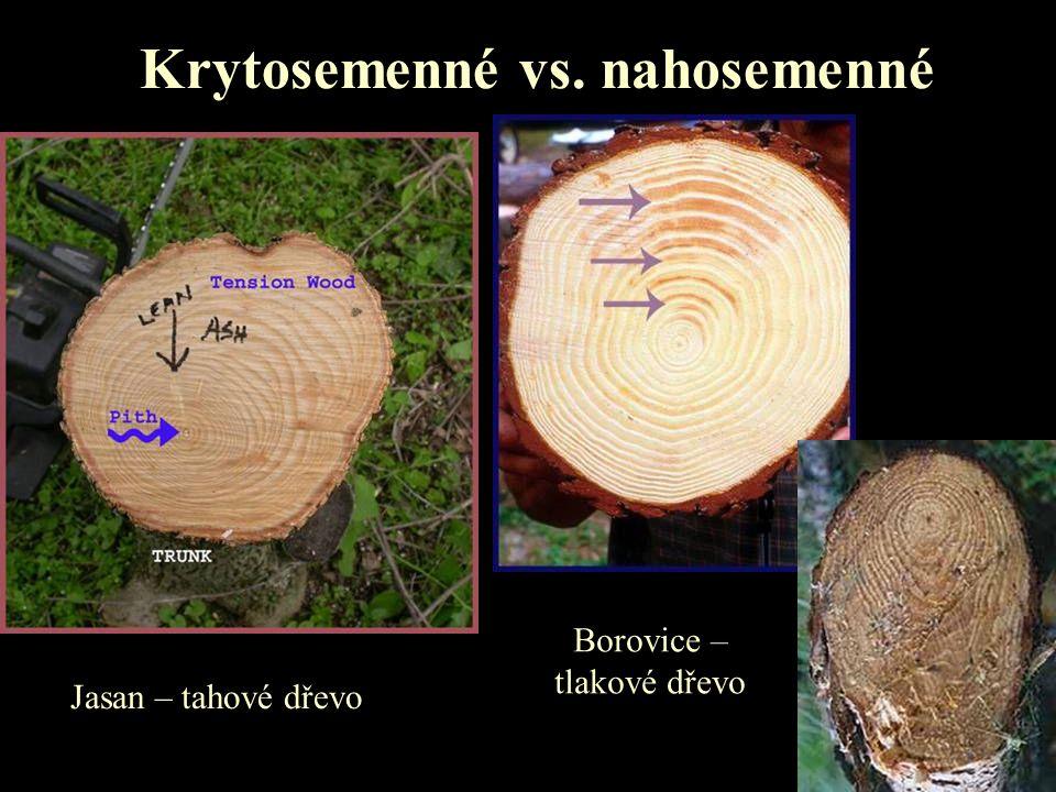 Krytosemenné vs. nahosemenné Jasan – tahové dřevo Borovice – tlakové dřevo