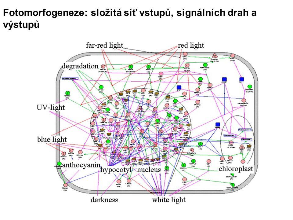 Fotomorfogeneze: složitá síť vstupů, signálních drah a výstupů