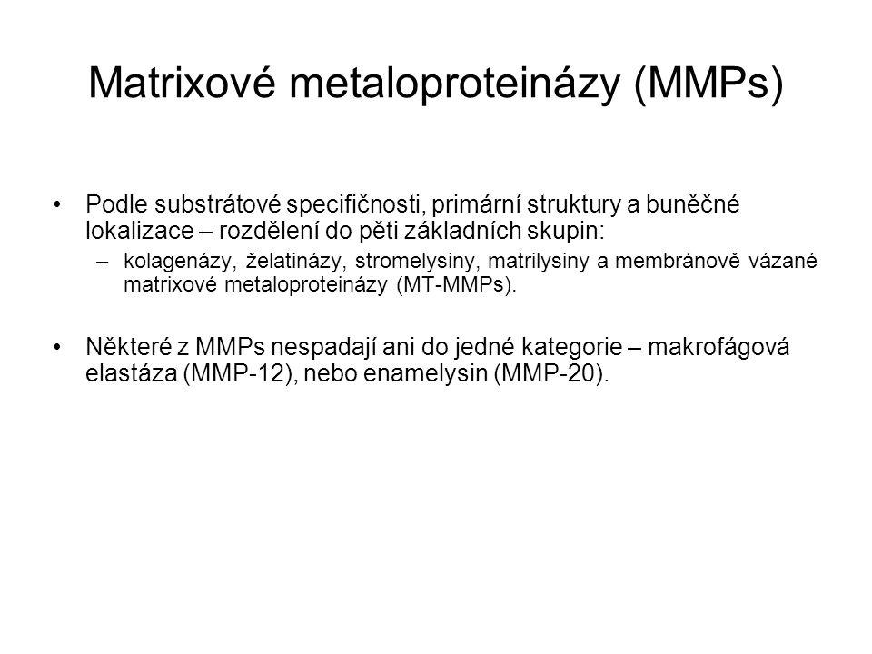 Matrixové metaloproteinázy (MMPs) Podle substrátové specifičnosti, primární struktury a buněčné lokalizace – rozdělení do pěti základních skupin: –kol