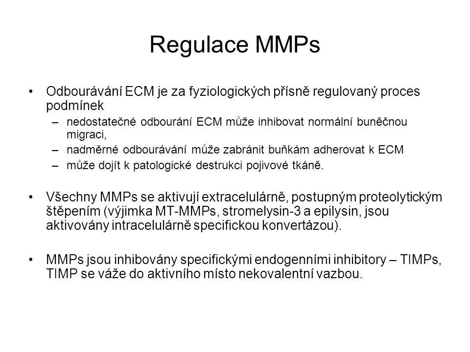 Regulace MMPs Odbourávání ECM je za fyziologických přísně regulovaný proces podmínek –nedostatečné odbourání ECM může inhibovat normální buněčnou migr