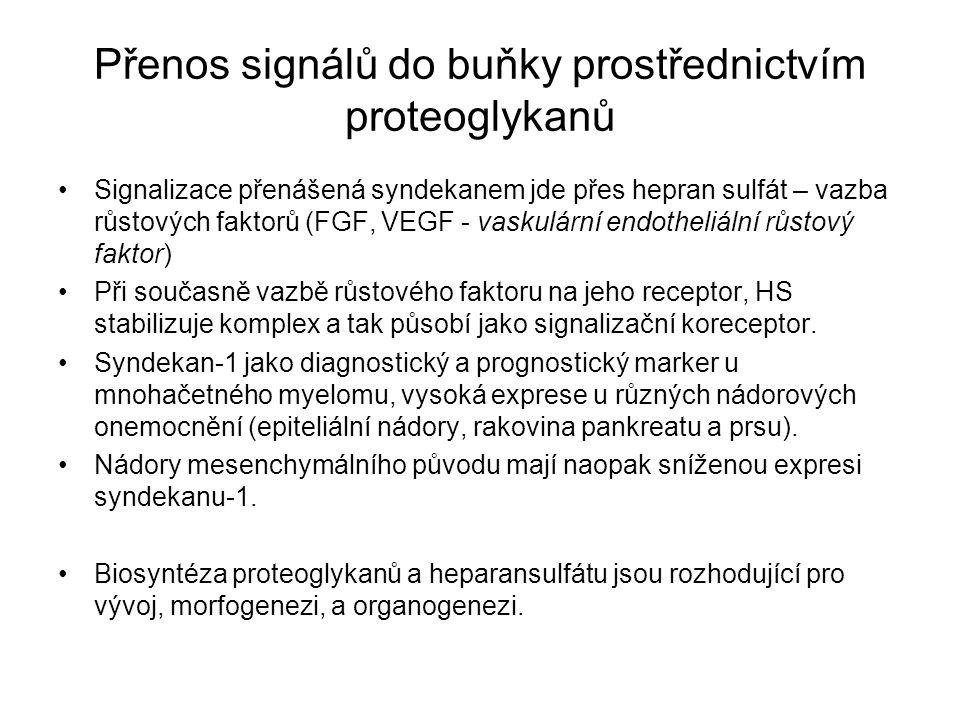 Přenos signálů do buňky prostřednictvím proteoglykanů Signalizace přenášená syndekanem jde přes hepran sulfát – vazba růstových faktorů (FGF, VEGF - v