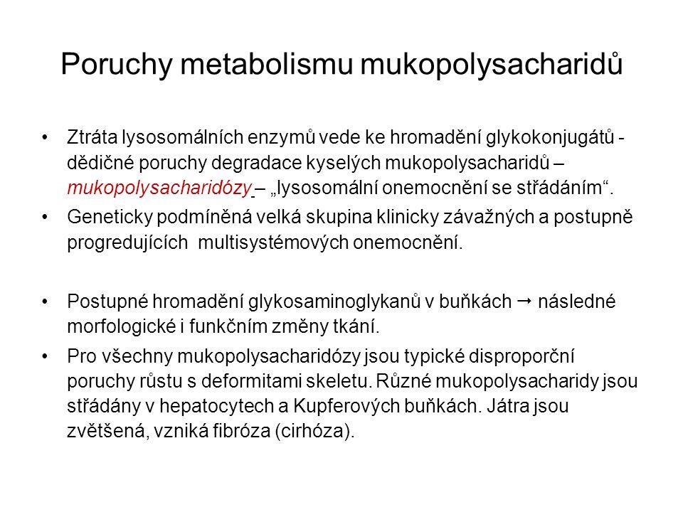Poruchy metabolismu mukopolysacharidů Ztráta lysosomálních enzymů vede ke hromadění glykokonjugátů - dědičné poruchy degradace kyselých mukopolysachar