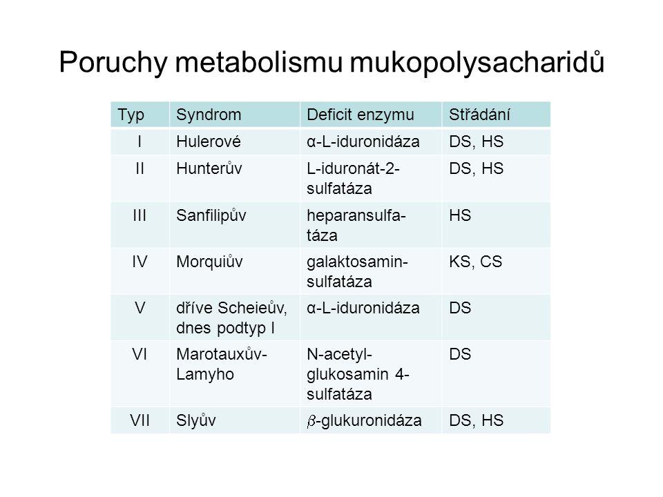 TypSyndromDeficit enzymuStřádání IHulerovéα-L-iduronidázaDS, HS IIHunterůvL-iduronát-2- sulfatáza DS, HS IIISanfilipůvheparansulfa- táza HS IVMorquiův