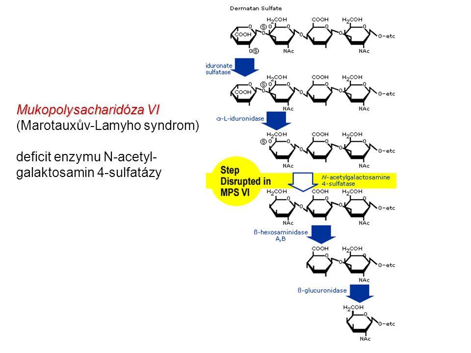 Mukopolysacharidóza VI Mukopolysacharidóza VI (Marotauxův-Lamyho syndrom) deficit enzymu N-acetyl- galaktosamin 4-sulfatázy