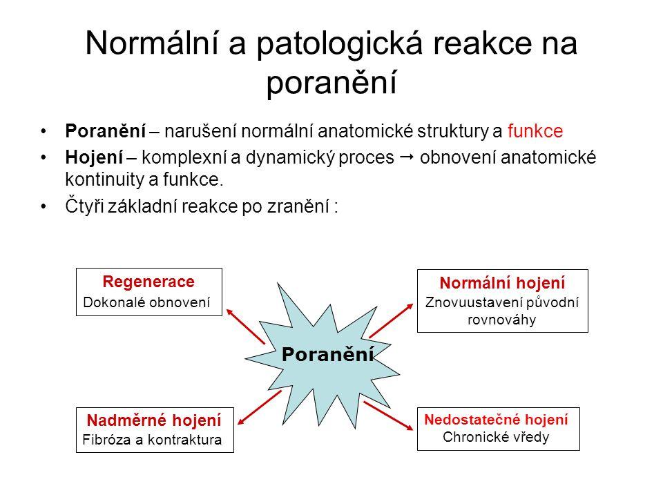 Normální a patologická reakce na poranění Poranění – narušení normální anatomické struktury a funkce Hojení – komplexní a dynamický proces  obnovení