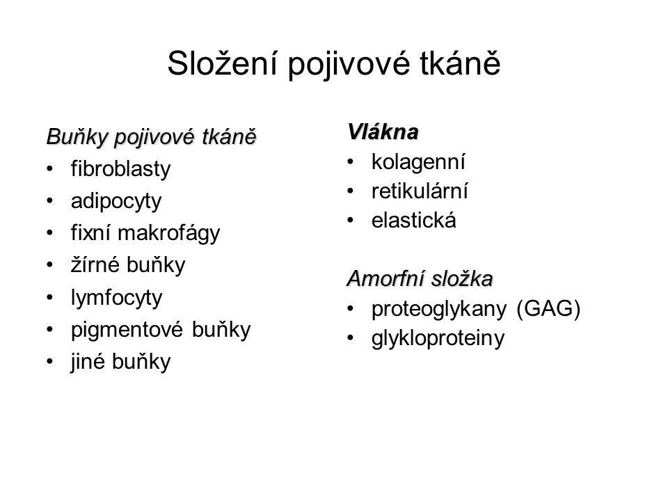 Nedostatečné hojení – chronický vřed Nehojící se kožní vředy (proleženiny) Exsudace (výpotek) - výstup tekutiny z dilatovaných cév v místě zánětlivé hyperemie (rozšířené cévy, vyšší permeabilita stěny) Přestup tekutiny bohaté na plasmatické bílkoviny do tkání (albuminy, globuliny, fibrinogen)  zánětlivý edém Současně permeabilní stěny cév dovolí přestup buněk do tkání  zánětlivý infiltrát Neutrofily – masivní infiltrace, uvolňování enzymů (MMPs) – destrukce kolagenní matrix.