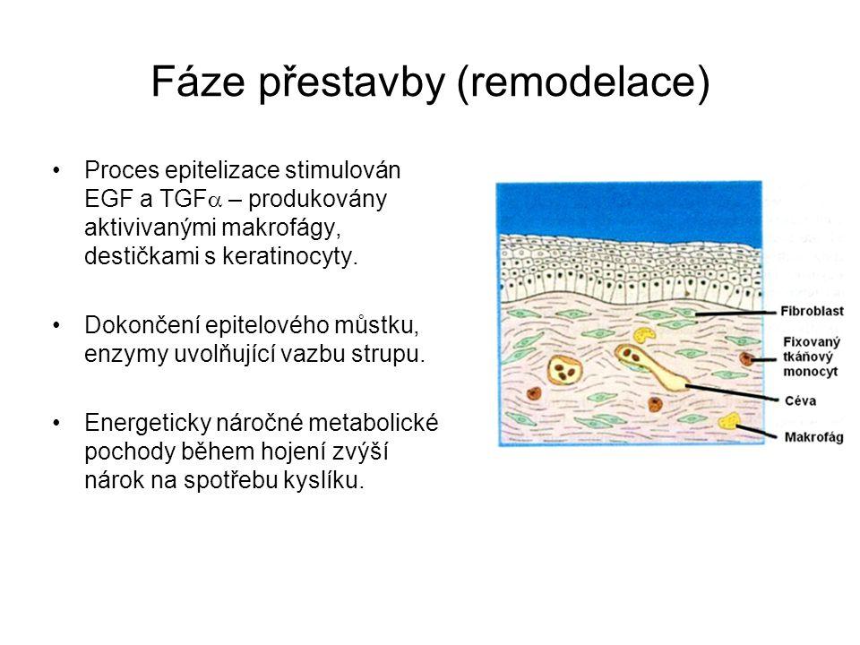 Fáze přestavby (remodelace) Proces epitelizace stimulován EGF a TGF  – produkovány aktivivanými makrofágy, destičkami s keratinocyty. Dokončení epit