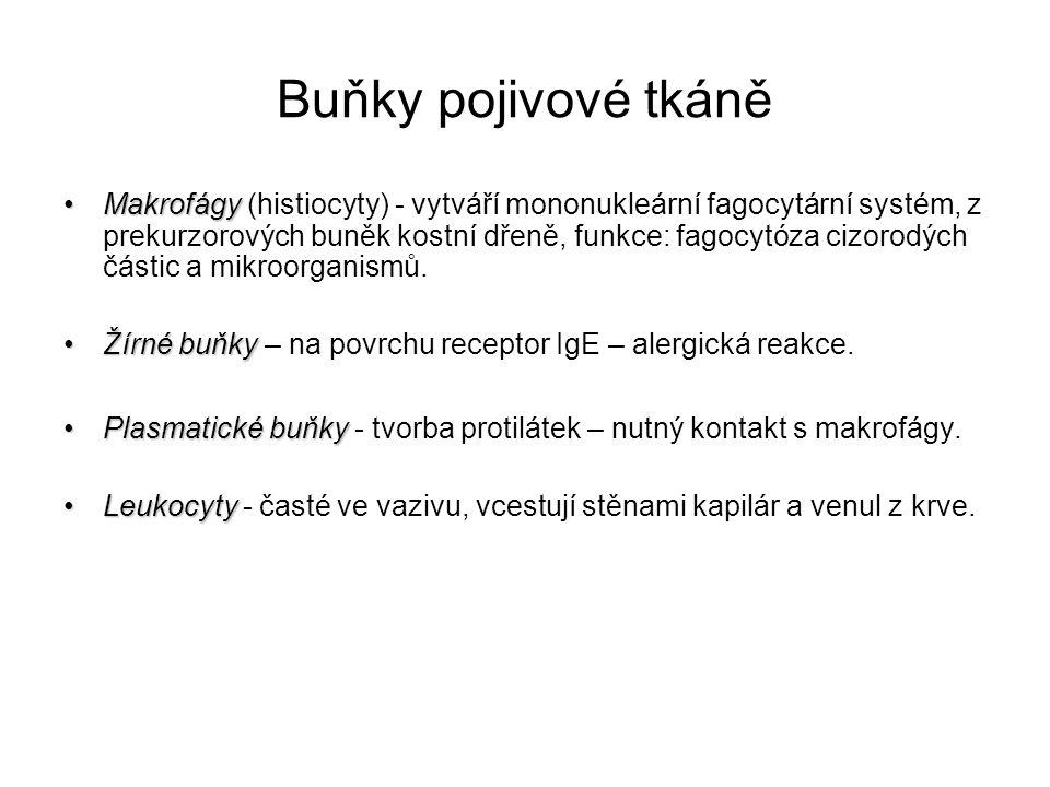 """Typy pojivové tkáně """"Pravá pojivová tkáň""""Pravá pojivová tkáň – obecná forma se všemi základními komponentami (buňky, vlákna)."""