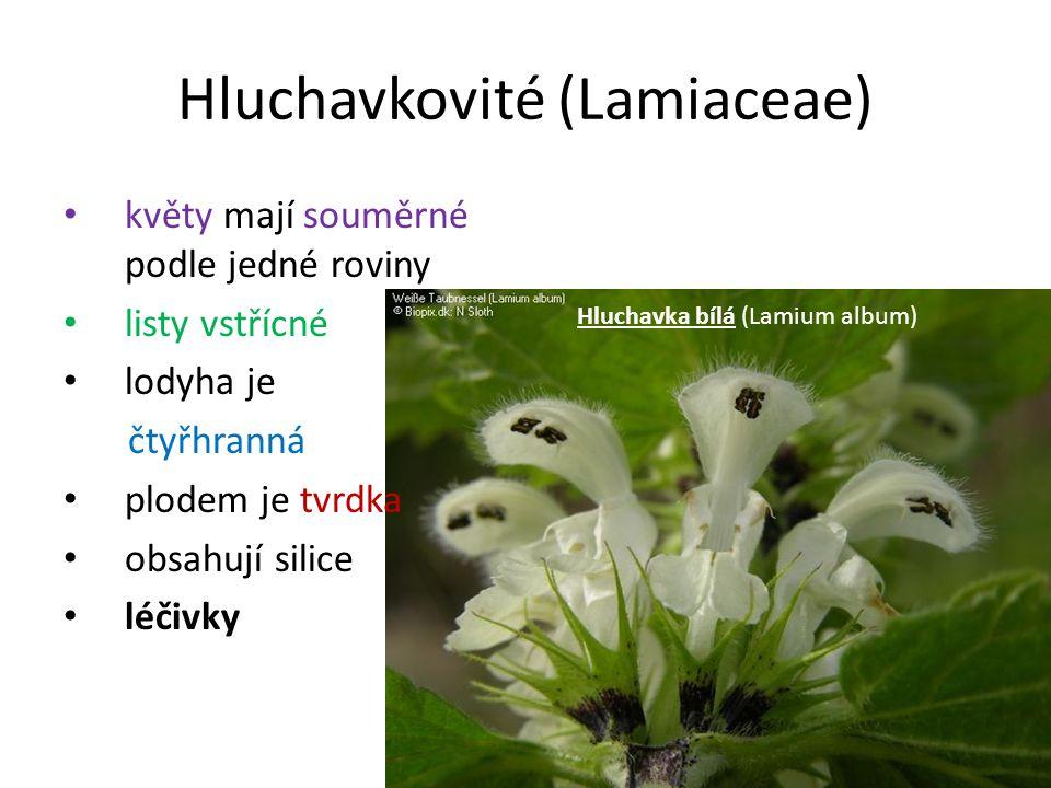 Hluchavkovité (Lamiaceae) květy mají souměrné podle jedné roviny listy vstřícné lodyha je čtyřhranná plodem je tvrdka obsahují silice léčivky Hluchavk