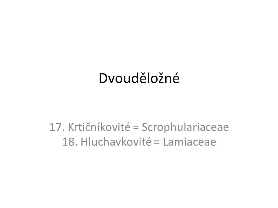 Dvouděložné 17. Krtičníkovité = Scrophulariaceae 18. Hluchavkovité = Lamiaceae