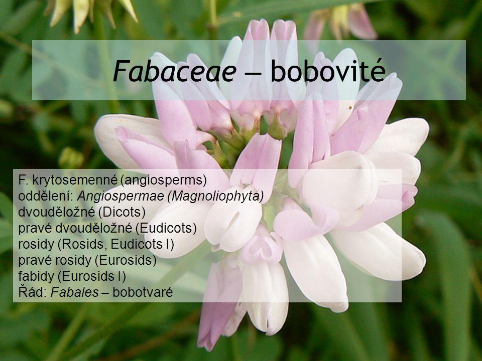 Fabaceae – bobovité F. krytosemenné (angiosperms) oddělení: Angiospermae (Magnoliophyta) dvouděložné (Dicots) pravé dvouděložné (Eudicots) rosidy (Ros
