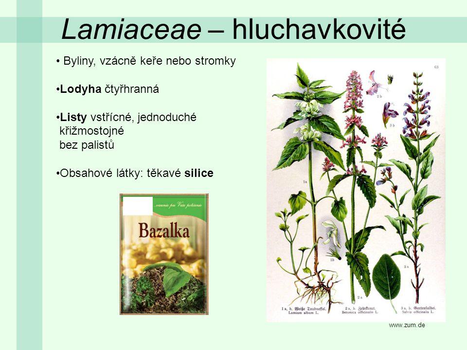 Lamiaceae – hluchavkovité Byliny, vzácně keře nebo stromky Lodyha čtyřhranná Listy vstřícné, jednoduché křižmostojné bez palistů Obsahové látky: těkav