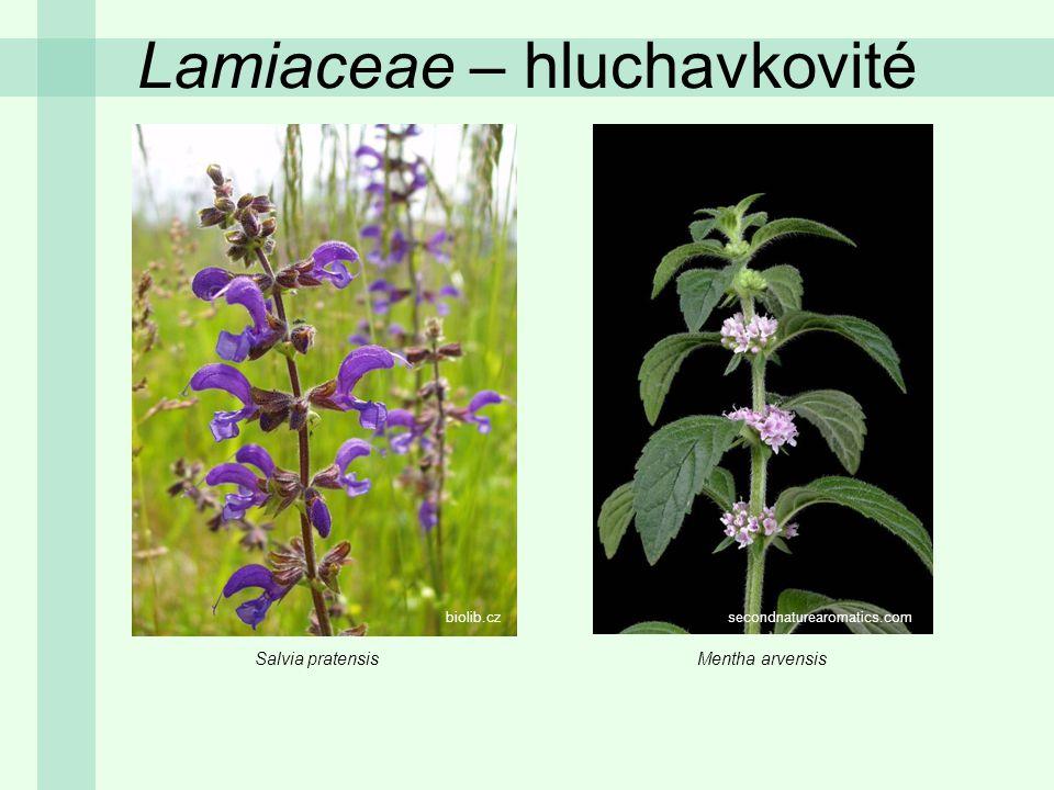 Lamiaceae – hluchavkovité Salvia pratensisMentha arvensis biolib.czsecondnaturearomatics.com