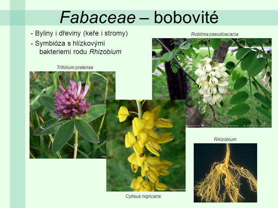 Fabaceae – bobovité -Listy střídavé, složené (zpeřené nebo dlanité), vzácně jednoduché -Palisty přítomny - Vzácně fylodia Trifolium pratense Genista tinctoria Lathyrus vernus Trifolium ochroleucon Securigera varia palist
