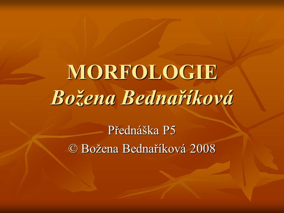 MORFOLOGIE Božena Bednaříková Přednáška P5 © Božena Bednaříková 2008
