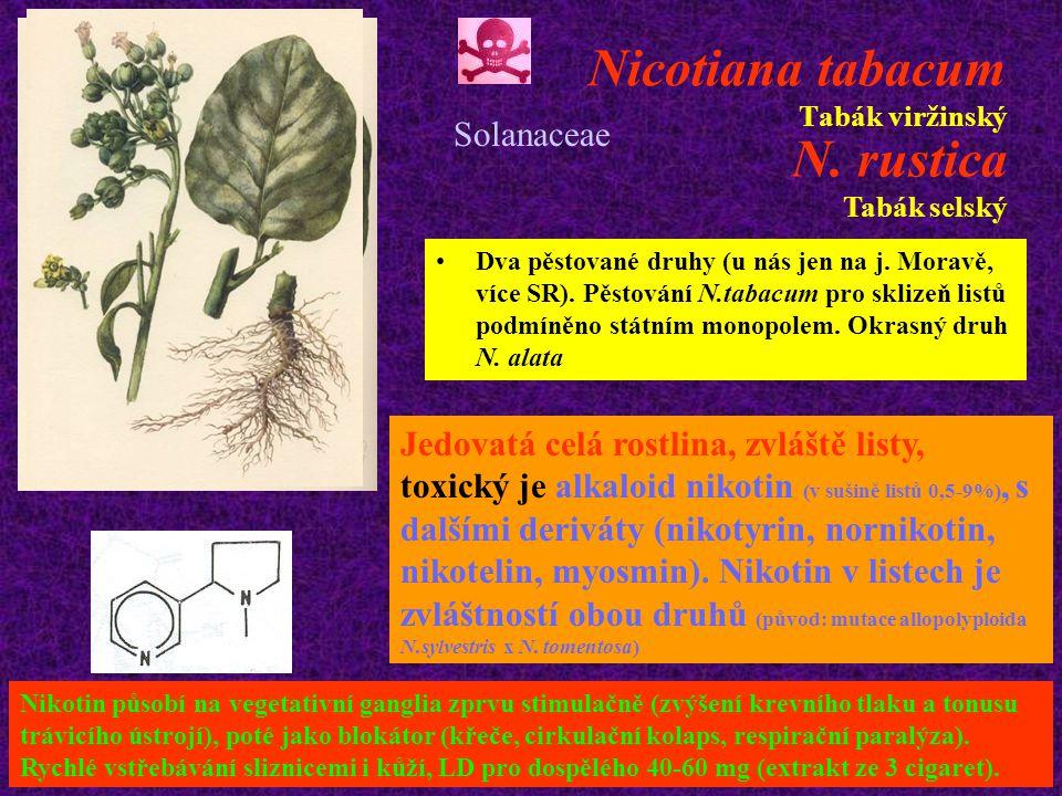 Nicotiana tabacum Tabák viržinský Dva pěstované druhy (u nás jen na j.