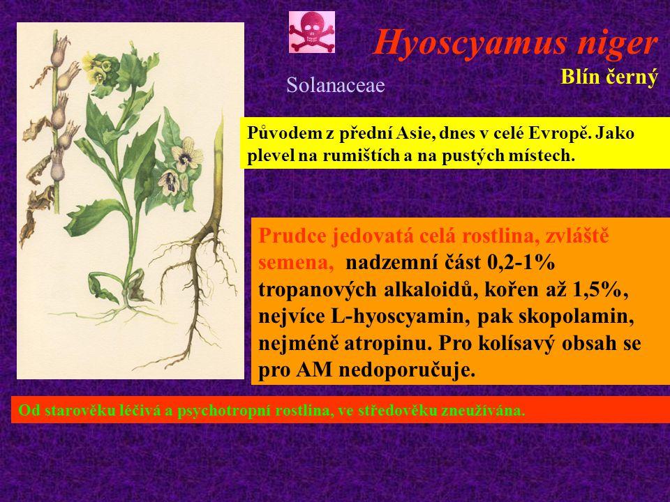 Hyoscyamus niger Blín černý Původem z přední Asie, dnes v celé Evropě.