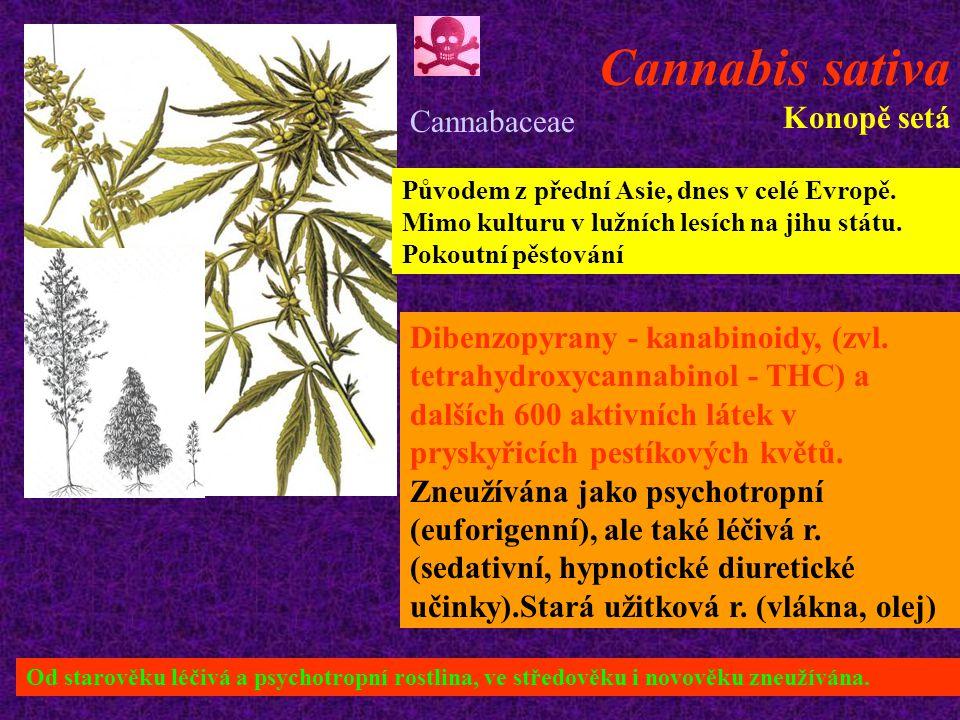 Cannabis sativa Konopě setá Původem z přední Asie, dnes v celé Evropě.