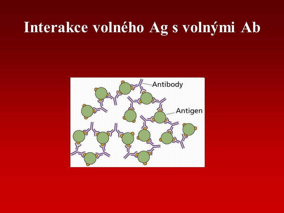 AFINITA vazba Ag-Ab zahrnuje vodíkové můstky, iontové vazby, hydrofóbní interakce, van der Waalsovy síly dána velikostí síly mezi jedním vazebným místem Ab a jedním epitopem Ag