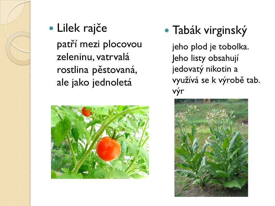 Lilek rajče patří mezi plocovou zeleninu, vatrvalá rostlina pěstovaná, ale jako jednoletá Tabák virginský jeho plod je tobolka. Jeho listy obsahují je
