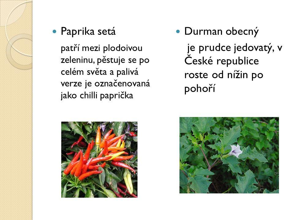Paprika setá patří mezi plodoivou zeleninu, pěstuje se po celém světa a palivá verze je označenovaná jako chilli paprička Durman obecný je prudce jedo