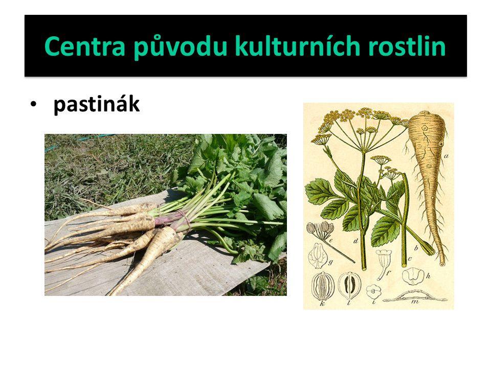 Centra původu kulturních rostlin pastinák