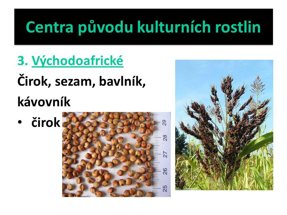 Centra původu kulturních rostlin 3. Východoafrické Čirok, sezam, bavlník, kávovník čirok
