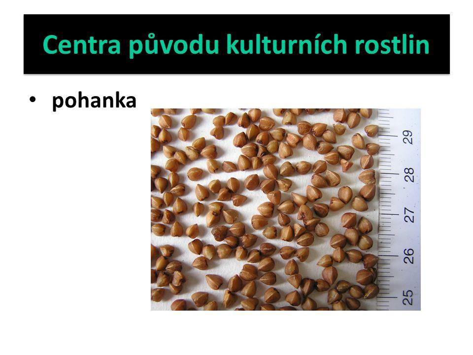Centra původu kulturních rostlin pohanka