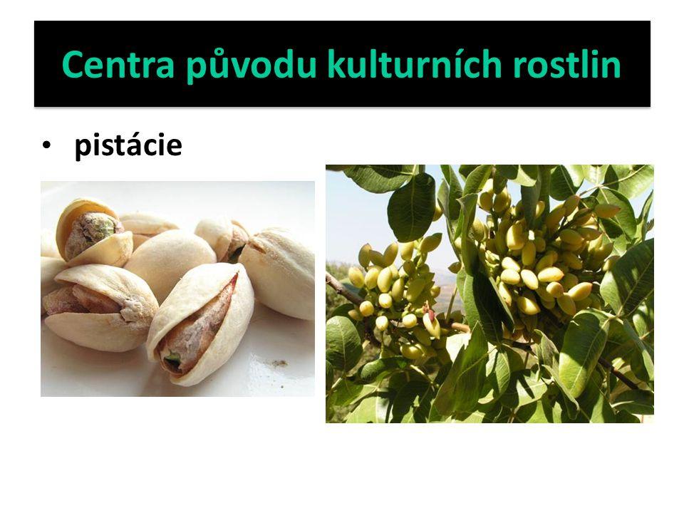 Centra původu kulturních rostlin pistácie