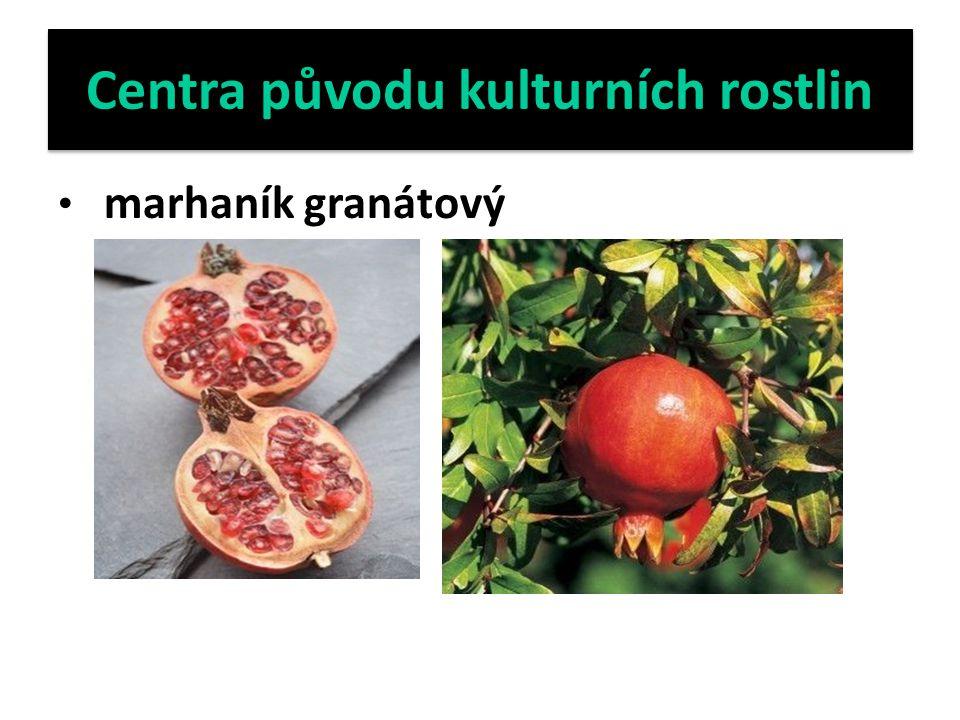 Centra původu kulturních rostlin marhaník granátový