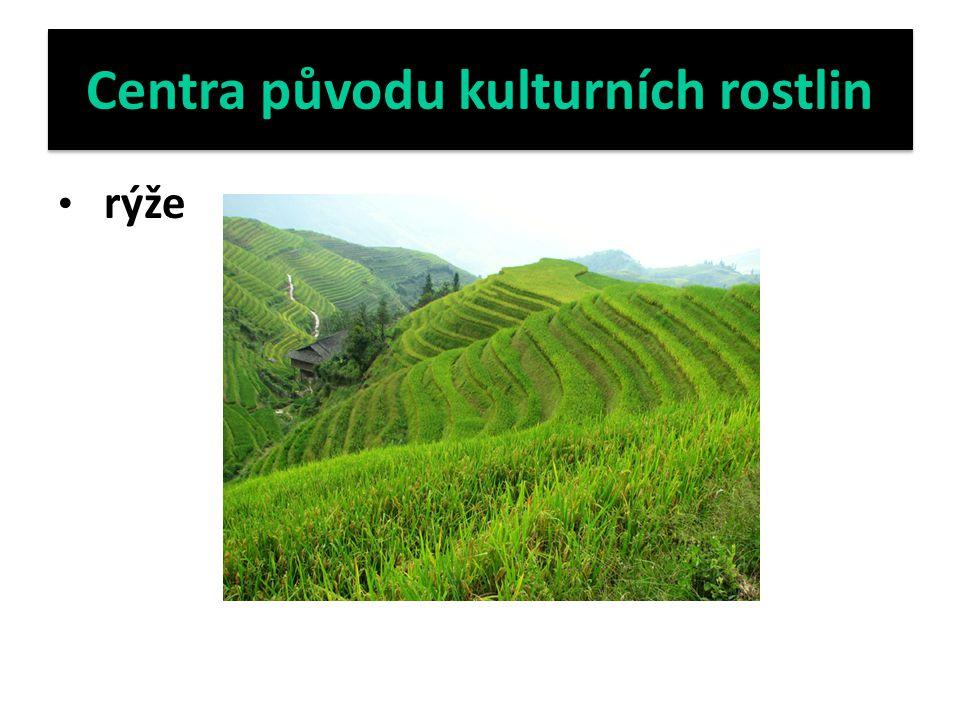Centra původu kulturních rostlin rýže