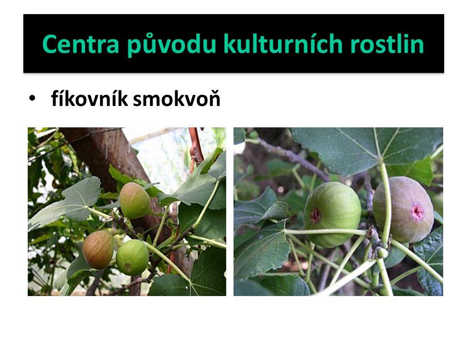 Centra původu kulturních rostlin fíkovník smokvoň