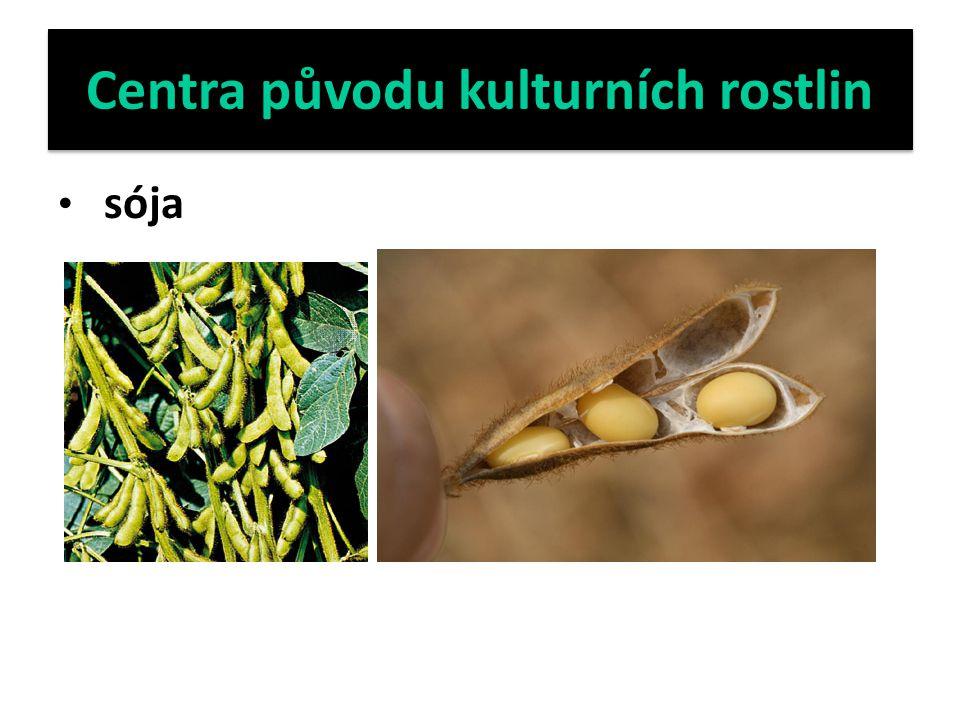 Centra původu kulturních rostlin sója
