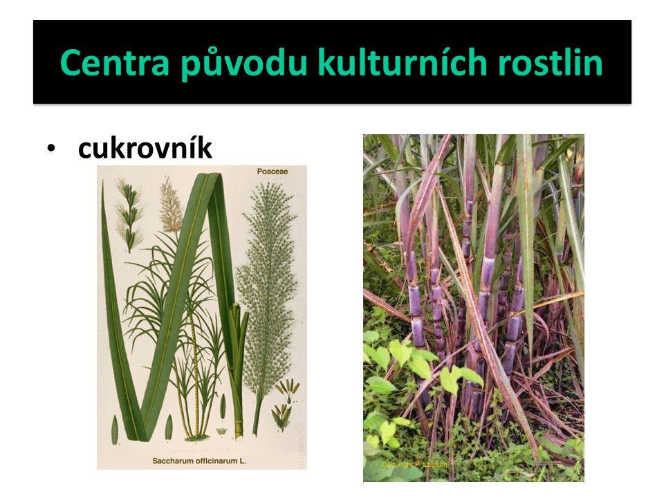 Centra původu kulturních rostlin cukrovník