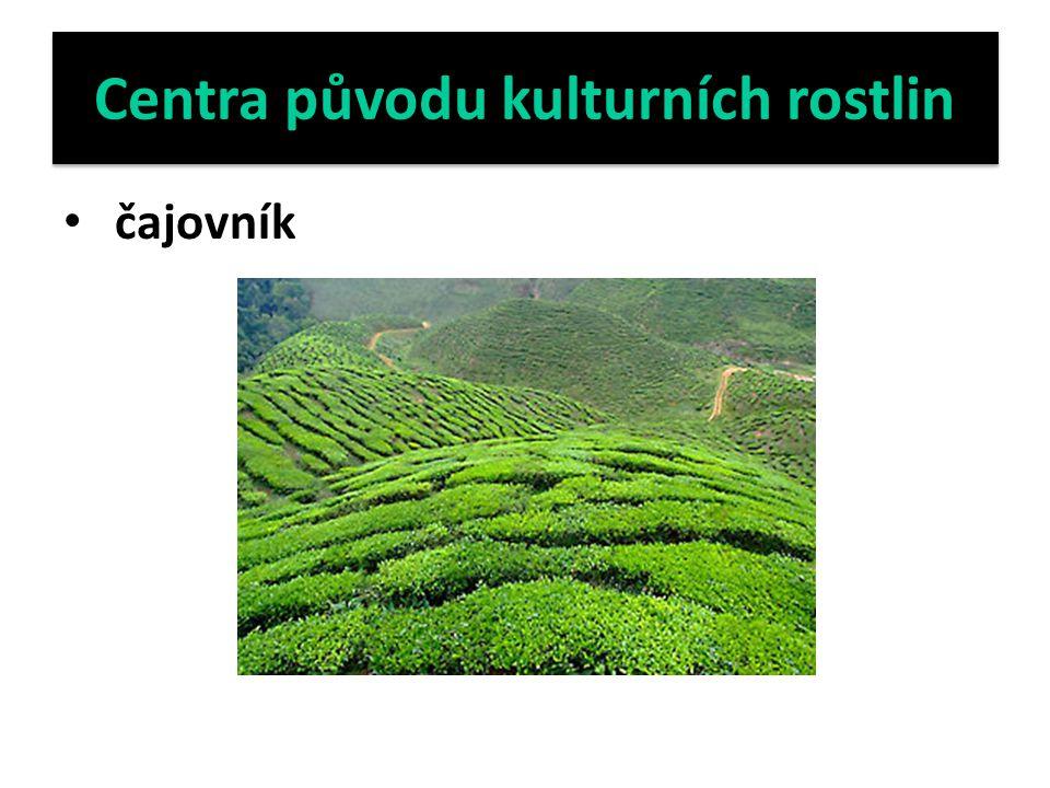 Centra původu kulturních rostlin čajovník